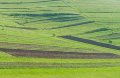Аграрный зеленый ландшафт на весеннем времени стоковая фотография rf