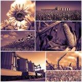 Аграрный коллаж фото урожаев Стоковое Изображение RF