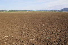 Аграрный край для овощей Стоковое фото RF