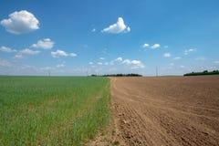 Аграрный ландшафт, пахотноспособное поле урожая tricolour Стоковое Изображение RF