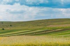Аграрный ландшафт, пшеничное поле на переднем плане, стоковые изображения