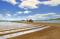 аграрный ландшафт Стоковое Фото