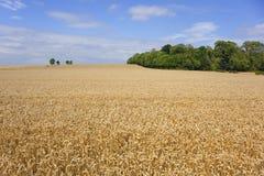 аграрный ландшафт Стоковые Изображения RF