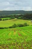 аграрный ландшафт Стоковое Изображение