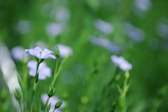 аграрный льнен урожая стоковое фото rf