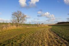 аграрный пейзаж Стоковая Фотография