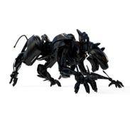агрессивныйая черная холодная пантера Стоковые Фотографии RF