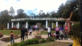 Агро технопарк в гористых местностях Малайзии MARDI Камерона Стоковые Фотографии RF