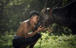 Азиатская забота фермера делает индийский буйвола влюбленности стоковые фотографии rf
