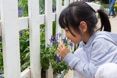 Азиатская китайская маленькая девочка играя рядом с полем лаванды Стоковая Фотография RF