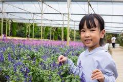 Азиатская китайская маленькая девочка представляя рядом с полем лаванды Стоковые Изображения