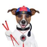Азиатская собака Стоковые Изображения RF