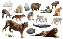 Азиатская фауна Изолировано на белизне Стоковое Фото