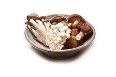 азиатские грибы Стоковые Фото