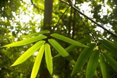 Азиатские джунгли Стоковая Фотография RF