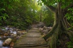 Азиатские джунгли Стоковое фото RF