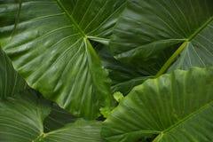 Азиатские джунгли Стоковое Изображение RF