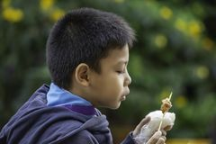 Азиатские мальчики едят липкий рис и жаркое свинины, еда просто и популярно для еды завтрака в Таиланде стоковая фотография rf