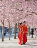 Азиатские пары в традиционных одеждах наслаждаются розовым цветенем вишни стоковое фото rf