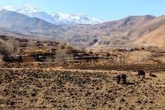 Азиатские поля горного села и террасы в осени в более низком мустанге, Непале, Гималаях, зоне консервации Annapurna стоковое фото