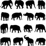 азиатские слоны Стоковые Изображения