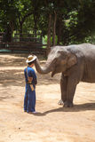 Азиатские слоны на тайском центре консервации слона Стоковые Изображения RF