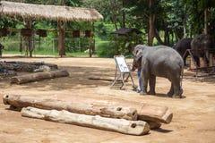 Азиатские слоны на тайском центре консервации слона Стоковая Фотография RF