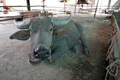 Азиатские bubalis индийского буйвола или буйвола Стоковая Фотография