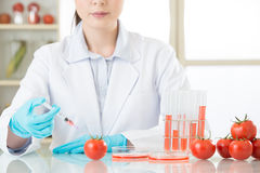Азиатский женский ученый испытывая томат gmo для здоровий человека Стоковые Фото
