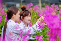 Азиатский исследователь женщины в белом платье и исследовать сад орхидеи для научных исследований и разработки нового вида орхиде стоковые изображения rf