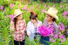 Азиатский исследователь женщины в белом платье и исследовать сад орхидеи для научных исследований и разработки нового вида орхиде стоковое фото