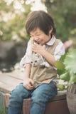 Азиатский мальчик держа американского котенка коротких волос Стоковая Фотография