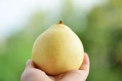 Азиатский плодоовощ груши Стоковое фото RF