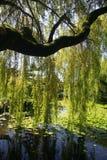 азиатский сад Стоковая Фотография