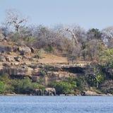 Азиатский слон в лагуне залива Arugam Стоковое Изображение