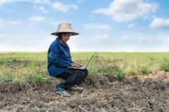 Азиатский тайский фермер используя портативный компьютер в поле риса Стоковое фото RF