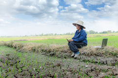 Азиатский тайский фермер используя smartphone и портативный компьютер в ri Стоковые Изображения RF