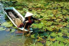 Азиатский фермер, лилия воды выбора, въетнамская еда Стоковые Изображения RF