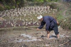 Азиатский фермер пашет рисовые поля земли используя мотыгу, Китай стоковое фото rf