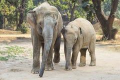 2 азиатских слона в джунглях Стоковое фото RF