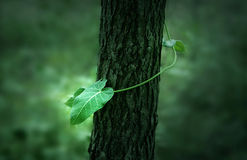 Азиатское зеленое растение  Стоковое фото RF
