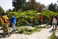 Азия Китай, Пекин, парк холма Jingshan, фестиваль ŒPeony ¼ landscapeï сада весны Стоковая Фотография