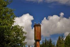3 аиста в гнезде высоком вверх на водонапорной башне Стоковое Изображение