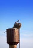 2 аиста в гнезде в солнечном дне Стоковое фото RF