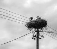 2 аиста в гнезде на поляке Стоковая Фотография