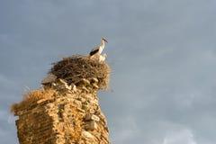2 аиста в гнезде на руинах в восходе солнца Стоковые Изображения