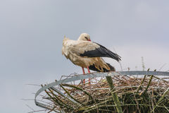 2 аиста на гнезде Стоковое фото RF