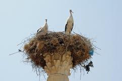 Аисты в гнезде - виске Capitoline, Volubilis, Марокко Стоковая Фотография RF