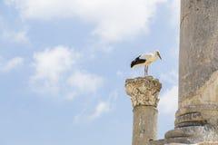 Аисты в Ephesus Стоковое Изображение RF