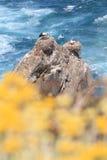 аисты гнездя стоковое изображение